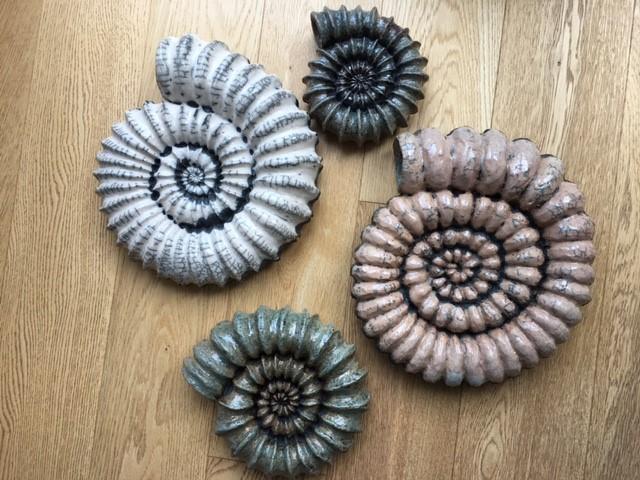 Raku Ammonites